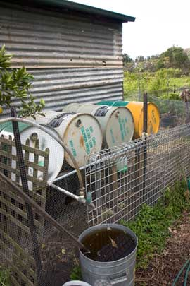 Glovers community gardeners harvest rainwater from the roof of their chook house and store it in clean, 200 litre fuel drums connected in series and fitted with a tap.